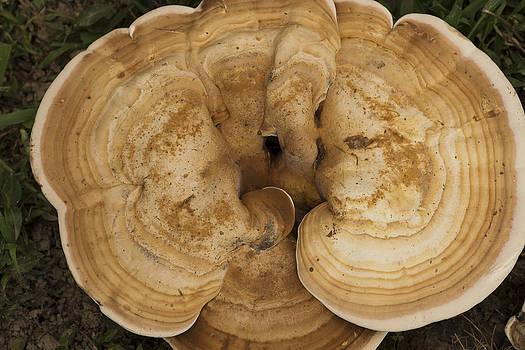 Mushroom Sculpture by Wanda Brandon