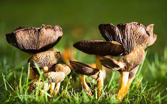 Mushroom time by Pedro Nunez
