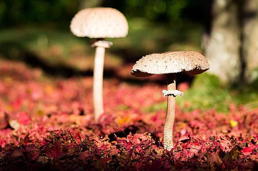 Mushroom by Trevor Wintle