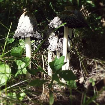 Mushrooms Are Doorways And I Love Them by Sacred  Muse