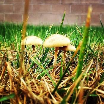 #mushrooms #fungi #grass #rain by A Loving