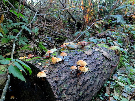 Mushrooms Growing On The Log by Tanya  Searcy