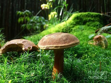 Mushrooms by Olivia Narius