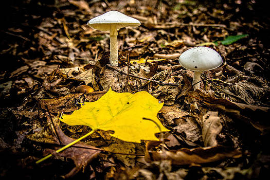 Mushrooms with Fall Leaf by Bill Boehm