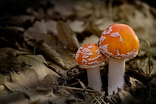 Mushrooms by Zoran Buletic