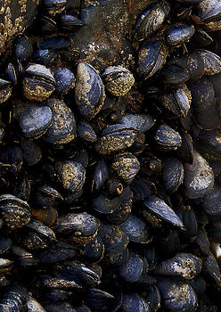 Mussels by Paul Howarth