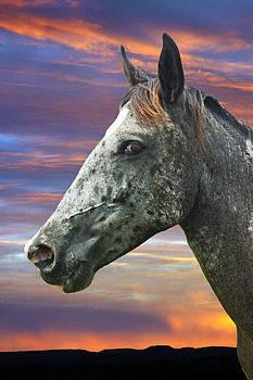 Robert Anschutz - Mustang Madness
