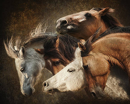 Mustangs by Ron  McGinnis