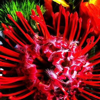 Mutant Alien Flowers  by Nick Hansen