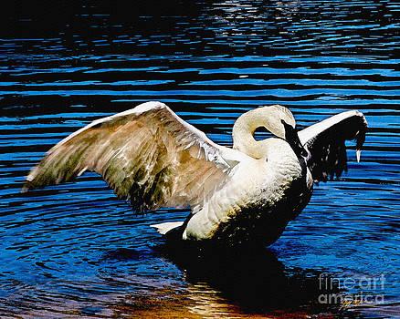 Jeff McJunkin - Mute Swan Majesty