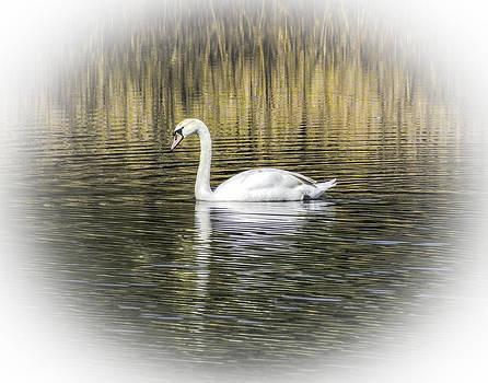 Terry Shoemaker - Mute Swan