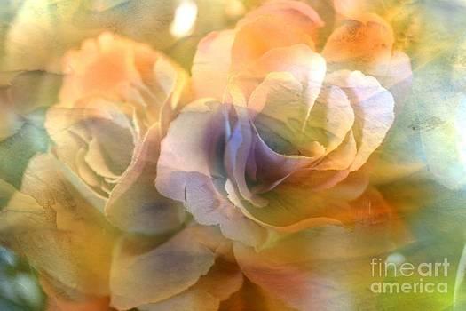 Muted Roses by Judy Palkimas