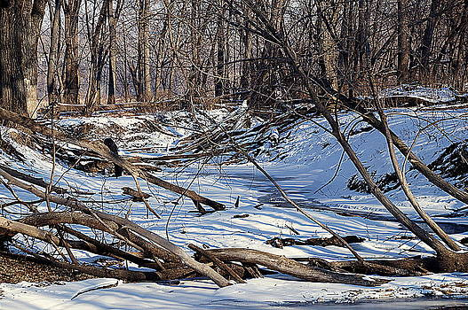 MVNWR Creek by KimberAnne