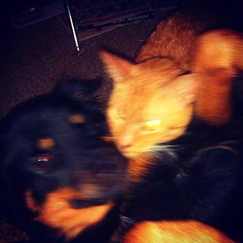My Animals Were Being Cute And I Ruined by Elisabeth Prudente