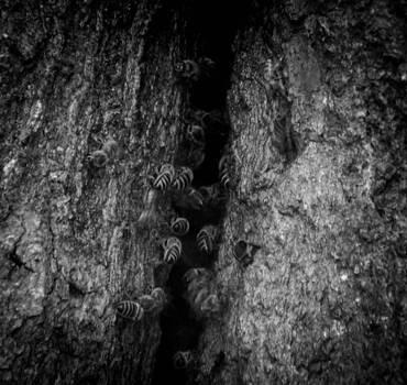 Christy Usilton - My Bee Tree