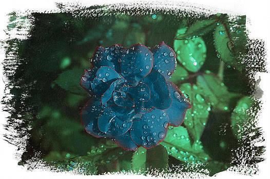My Blue Rose by David Yocum