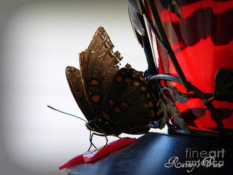 My Broken Wings Still Fly by Lorraine Heath