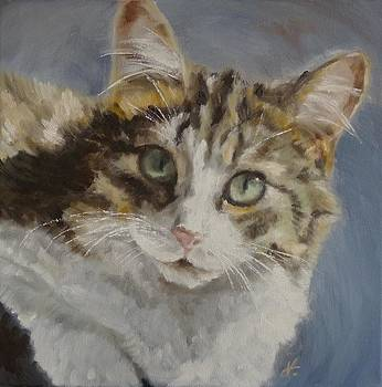 My Cat - Precious by Veronica Coulston