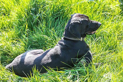 My Dog Jack by Pandyce McCluer