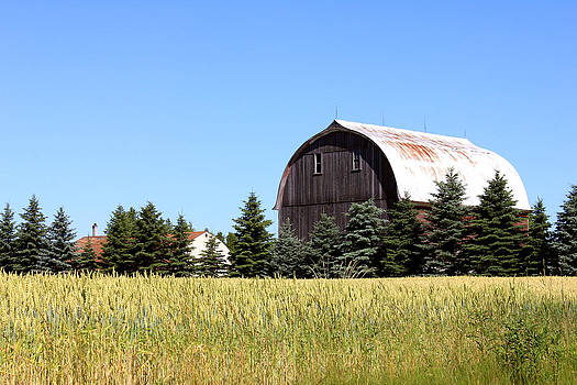 My Favorite Barn by Sheryl Burns