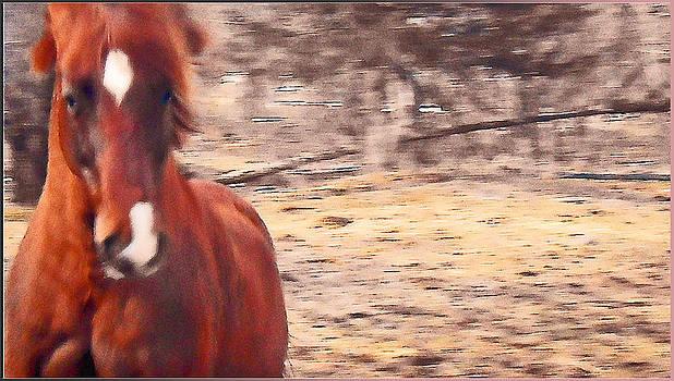 My Fine Friend The Flashy Chestnut Stallion by Patricia Keller