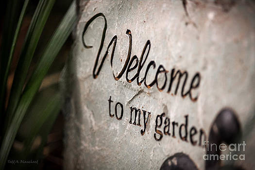 My Garden by Todd Blanchard