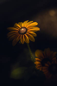 My Guiding Light by Paul Barson