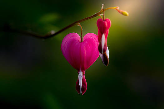 My Heart For You by Paul Barson