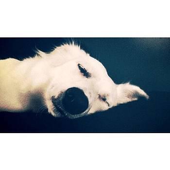 My Little Polar Bear by Patrick Jay