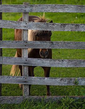 My Little Pony by Christy Patino