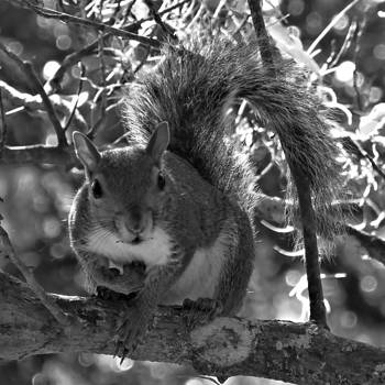My New Squirrel Friend by David  Brown