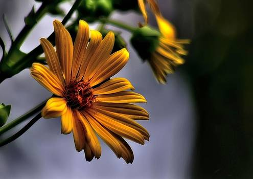 My only sunshine by Jeff S PhotoArt