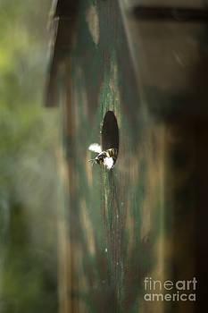 Angel  Tarantella - My pet wasps