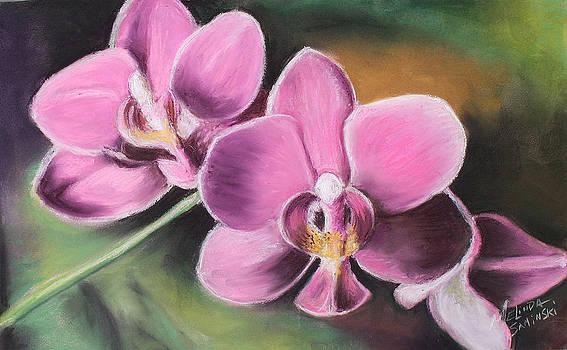 My Pink Orchid by Melinda Saminski