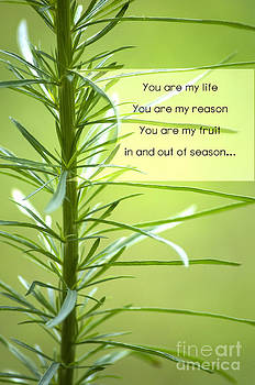 My Reason is You by Affini Woodley