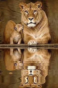 My Reflection by Janet Moss
