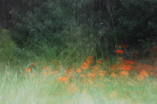 Donna Blackhall - My Secret Garden