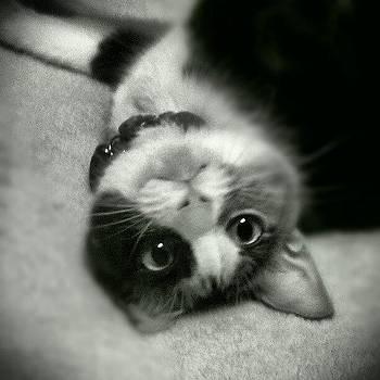 My Silly Kitty by Jedi Fuser