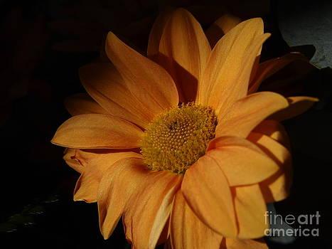 My sun flower by Victoria Herrera