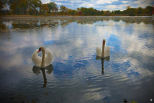 My Swans by A And N Art