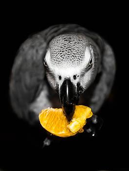 My Sweet Clementine  by Paulina Szajek
