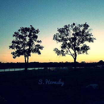 My Two Favorite Trees by Samantha Hornsby