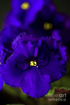 Tamyra Ayles - My Violet II