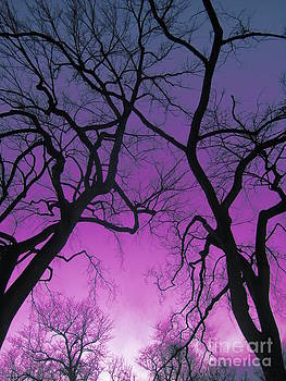My Vision of the Trees by Nickey Brumbaugh