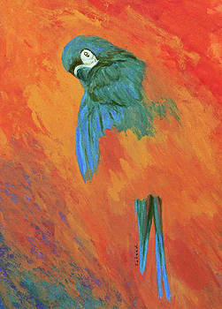 Margaret Saheed - Mysterious Macaw
