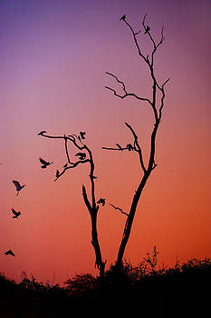 Jenny Rainbow - Mysterious Sunset with Solo of the Tree and Choir of Birds