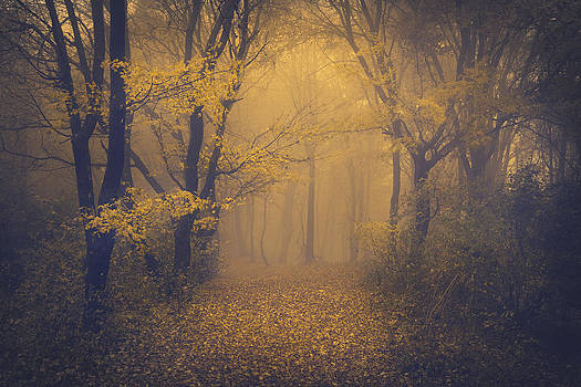 Mysterious trails by Toma Bonciu