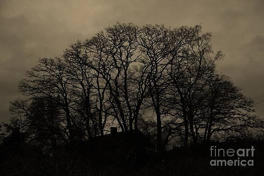 Vicki Maheu - Mysterious Trees 2
