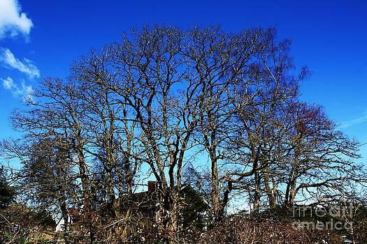 Vicki Maheu - Mysterious Trees