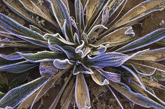 Mystery Plant by Sherri Meyer